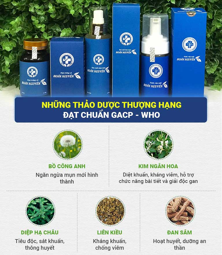 Công dụng của từng loại thảo dược có trong Bộ sản phẩm Trị Mụn Trứng cá Hoàn Nguyên