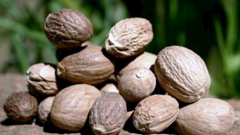 Hạt nhục đậu khấu là vị thuốc nam chữa chàm da hiệu quả