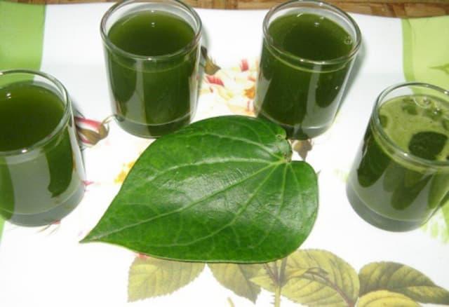 Kết hợp rau răm, lá trầu không trong trị bệnh chàm