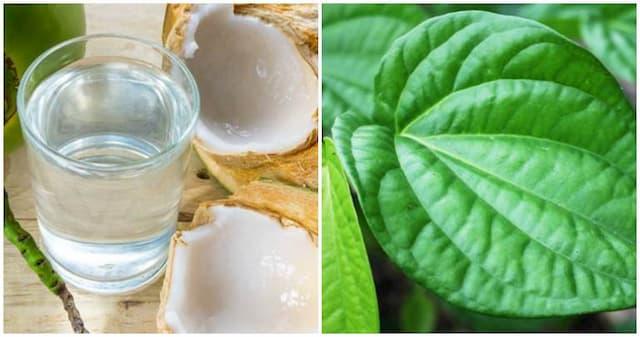 Sử dụng kết hợp dầu dừa với trầu không khi trị bệnh