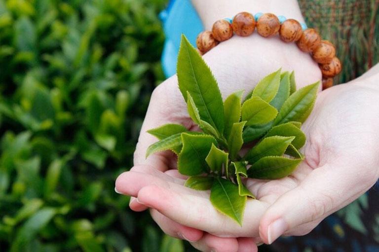 Tắm với nước lá trà xanh để trị mụn ở ngực, chống lão hóa.