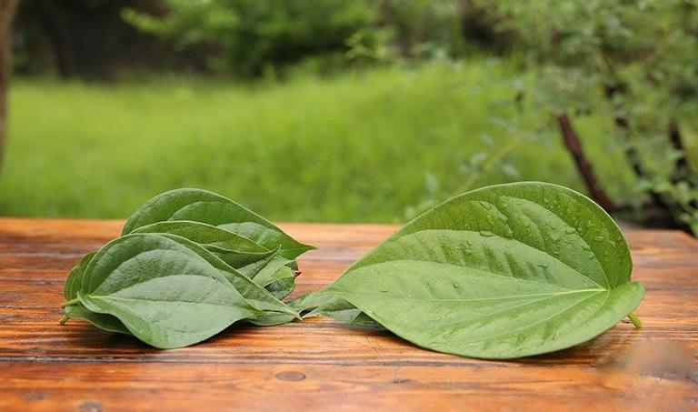Dùng lá trầu không để chữa bệnh viêm da cơ địa chỉ nên thực hiện 1 lần/ tuần để tránh làm khô da