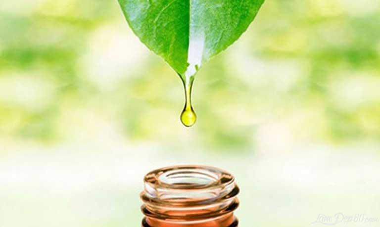 Sử dụng tinh dầu trà để kháng viêm