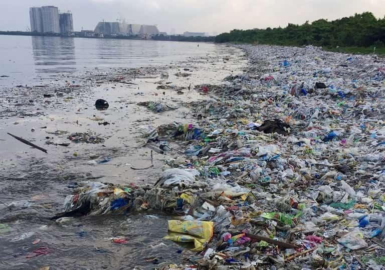 Môi trường ô nhiễm có thể là nguyên nhân sinh ra nấm bệnh