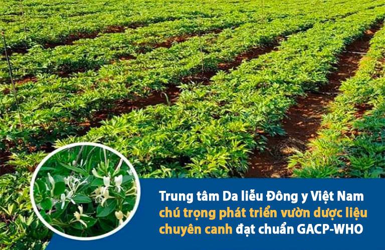 Các vị thuốc được chăm sóc và thu hái tại các vườn dược liệu chuyên canh đạt chuẩn GACP-WHO