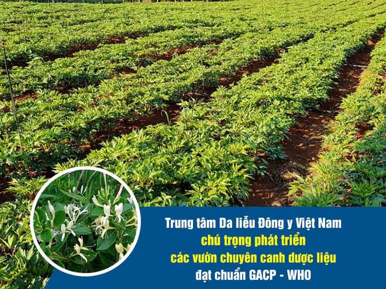 Viện Da liễu Hà Nội - Sài Gòn chú trọng đầu tư vào các vườn dược liệu sạch đạt chuẩn GACP-WHO